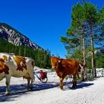 Radtour München Isarquellen :: günstig und individuell