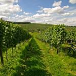 Main Radweg Kurzurlaub :: günstig mit Bayern Radtour